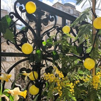 guirlande LED guinguette citron, en situation